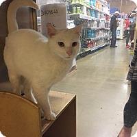 Adopt A Pet :: Blanco - McDonough, GA