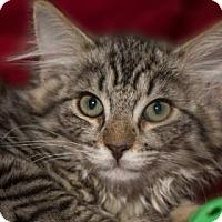 Adopt A Pet :: Destiny - Fountain Hills, AZ