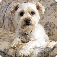 Adopt A Pet :: Snickers - Mississauga, ON