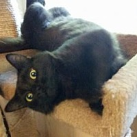 Adopt A Pet :: Sam - Greensboro, NC