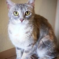 Adopt A Pet :: Amber - Fredericksburg, TX