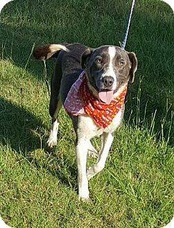 Retriever (Unknown Type) Mix Dog for adoption in Kittery, Maine - Hailey