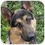 Photo 2 - German Shepherd Dog Dog for adoption in Los Angeles, California - Fargo von Frankfurt