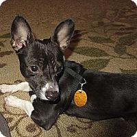 Adopt A Pet :: Buddy - Somers, CT