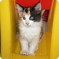 Adopt A Pet :: Twitter n Twinke - lake elsinore, CA