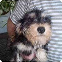 Adopt A Pet :: Mayling - Cincinnati, OH