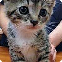 Adopt A Pet :: Melissa - Secaucus, NJ