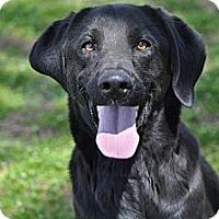 Adopt A Pet :: Luke - Pocahontas, AR