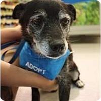 Adopt A Pet :: Gulliver - Arlington, TX