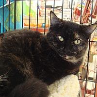 Adopt A Pet :: Princess M - Sacramento, CA