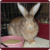 Adopt A Pet :: Ginger - Williston, FL