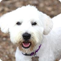 Adopt A Pet :: Birminham - Norwalk, CT
