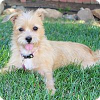 Adopt A Pet :: Latte (female) - Yorba Linda, CA