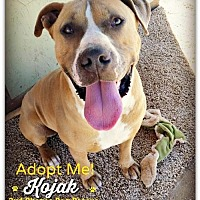 Adopt A Pet :: Kojak - Queen Creek, AZ