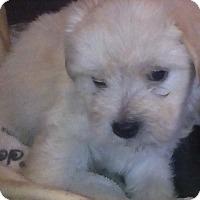 Adopt A Pet :: Blanca - San Diego, CA