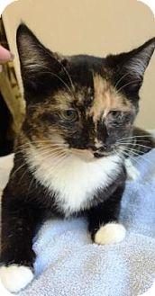 Calico Kitten for adoption in Lincolnton, North Carolina - Bermuda;$20