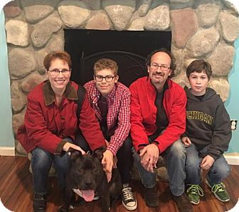 Pit Bull Terrier Mix Dog for adoption in Northville, Michigan - Remy -ADOPTED