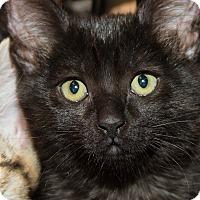 Adopt A Pet :: Bagheera - Irvine, CA