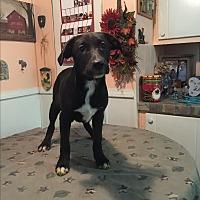 Adopt A Pet :: Jewel - Kittery, ME