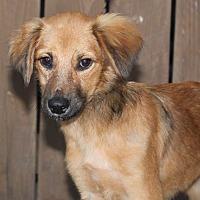 Adopt A Pet :: Tambor - from Costa Rica - Los Angeles, CA