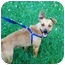 Photo 2 - Jack Russell Terrier/Miniature Pinscher Mix Dog for adoption in Kokomo, Indiana - Penne