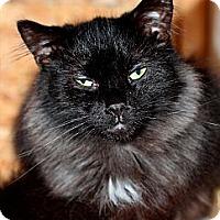 Adopt A Pet :: Sponsor Adorable Wilbur - Halifax, NS