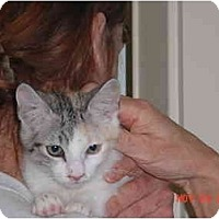 Adopt A Pet :: Bijou - Pendleton, OR