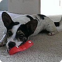 Adopt A Pet :: Duke ($250 fee) - Brattleboro, VT