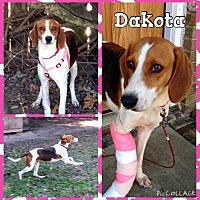 Adopt A Pet :: Dakota - Sumter, SC