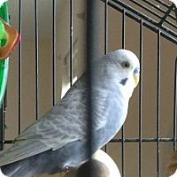 Adopt A Pet :: Fidel & Elmira - Punta Gorda, FL