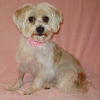 Adopt A Pet :: Sissy - Charlotte, NC