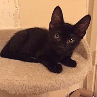 Adopt A Pet :: Blaze - Woodland Hills, CA