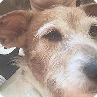 Adopt A Pet :: Limerick - Jupiter, FL