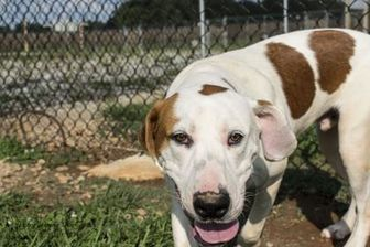 Hound (Unknown Type) Mix Dog for adoption in Winchester, Tennessee - Magic