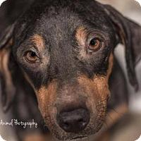 Adopt A Pet :: H. Hilly - Freeport, FL