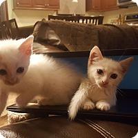 Adopt A Pet :: Sally - Berkeley Hts, NJ