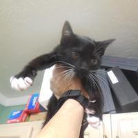 Adopt A Pet :: Lennon - Morgan Hill, CA