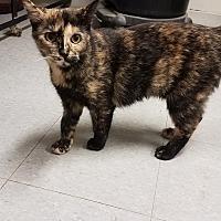 Adopt A Pet :: C-9 - Indianola, IA