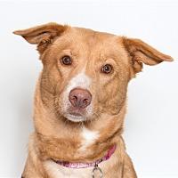 Adopt A Pet :: Autry - San Luis Obispo, CA