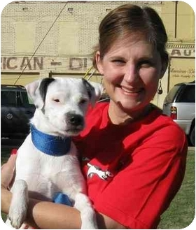 Jack Russell Terrier Dog for adoption in Olive Branch, Mississippi - Little Joe