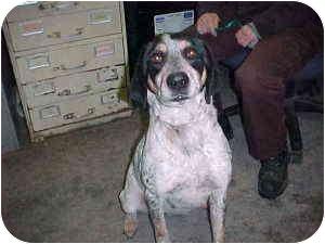 Hound (Unknown Type) Mix Dog for adoption in Gladwin, Michigan - Hound Mix