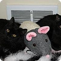Adopt A Pet :: Tippy & Tommy - Kalamazoo, MI