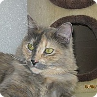 Adopt A Pet :: Novalee - Colorado Springs, CO