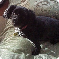 Adopt A Pet :: Dizie&Gizmo - Toronto, ON