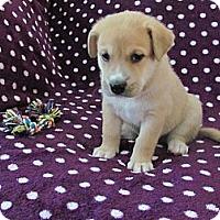 Adopt A Pet :: Moose - Cathedral City, CA