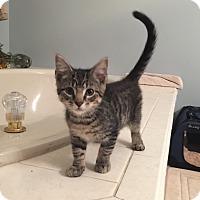 Adopt A Pet :: Pudge - Jackson, NJ