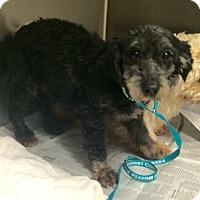 Adopt A Pet :: Krumpet - Oak Ridge, NJ
