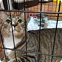Adopt A Pet :: Mayme - Lutherville, MD