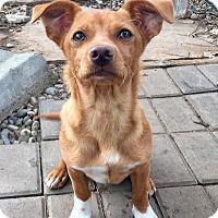 Adopt A Pet :: Jerry - Santa Ana, CA