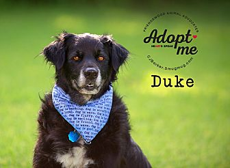 Flat-Coated Retriever/Retriever (Unknown Type) Mix Dog for adoption in Friendswood, Texas - Duke